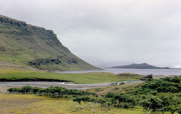 Iceland_forest_June_1974